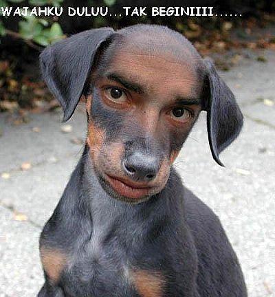Funny Dog Man